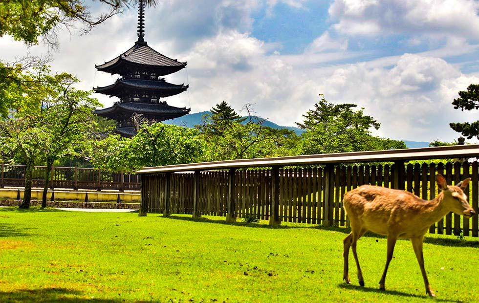 奈良公園と鹿のイメージ